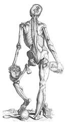 Anatomical Body Exhibit 2