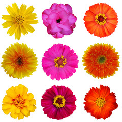 flower collection flower on the white background isolated