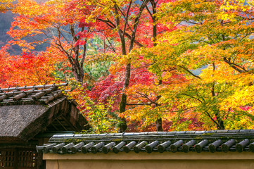 Wall Mural - Japan autumn season with architecture roof in the park, Japan.