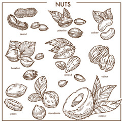 Nuts sketch icons set vector organic raw food