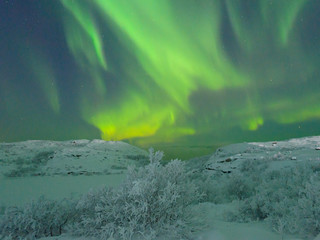 Winter,frost on the trees and in the sky the northern lights,aurora.