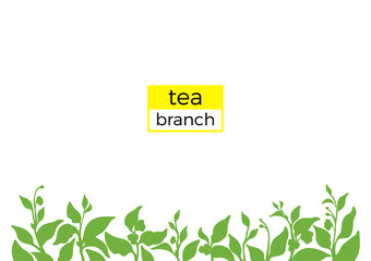 Template of green branch of tea bush. Nature illustration. Vector
