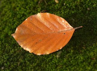 pożółkły liść na mchu