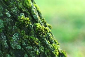 mchy i porosty na drzewach