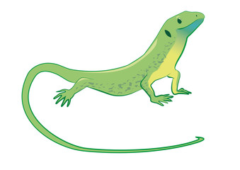 Cute and funny green lizard. Vector illustration