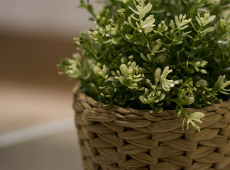 White Flowers in Basket over blury background