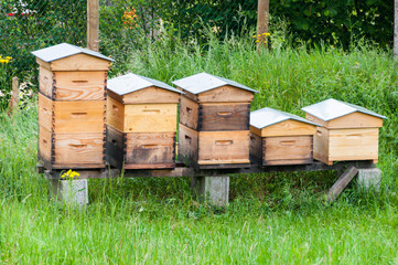 Wooden hives