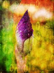 Irys, obraz na abstrakcyjnym tle