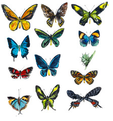 Set of butterflies. Hand drawn watercolor illustration.