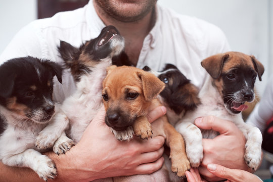 Young man holding 5 puppies in his hands. Cute gog family together. Rescue animal concept