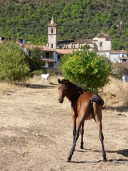 Caballo en pueblo de Castilla, España