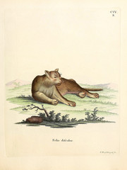 Mammals of the family Felidae.