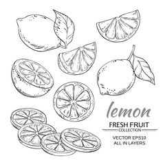 lemon vector set