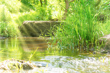 Stream in the tropical forest with sun light. Environment sunny landscape