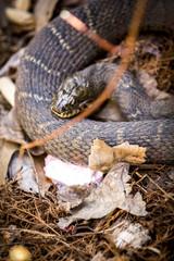 Snake resting