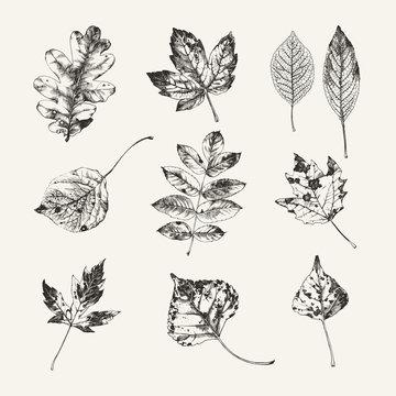 Hand drawn autumn leaves
