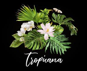 Tropicana plants compostion