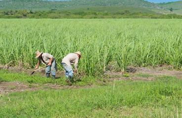 Kubanische Bauer und Erntehelfer auf dem Zuckerrohrfeld beim Ernten in Santa Clara - Serie Cuba Reportage