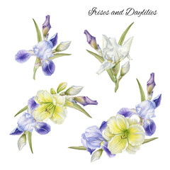 Bouquet of flowers. Flowers set of hand drawn watercolor daylilies and irises