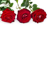 Red roses on a white background with space for text. Valentine decoration.
