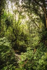 nature at its best - Laxshapana Sri Lanka