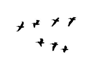 Dalmatian pelican (Pelecanus crispus) wedge in flight. Vector silhouette a flock of birds
