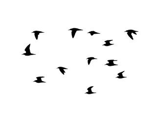 Ruff (Calidris pugnax) in flight. Vector silhouette a flock of birds
