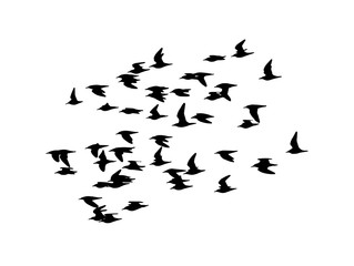 Ruff (Calidris pugnax) in flight. Vector silhouette a flock of birds