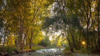 bucolic autumn forest and river. north of spain.