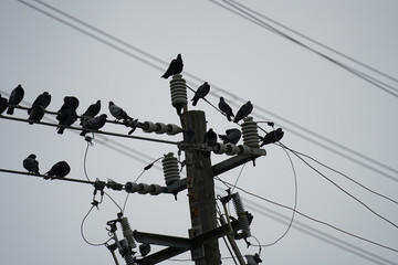 Power Lines in the City - Birds on Wire