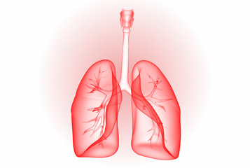 3d rendered lungs