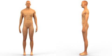Human Male Muscle Body Anatomy