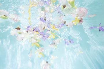水中花 水の中で花が浮遊する