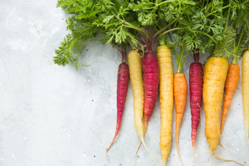 rainbow carrots on a grey background
