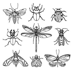 Set of insects on white background. Vector symbol