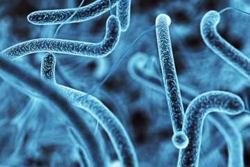 Blue bacteria texture