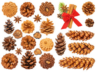 Christmas Pine Cones Isolated on White Background