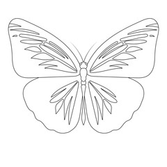 Butterfly line art vector illustration