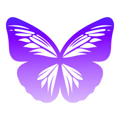 Butterfly isolated on white background. Vector illustration