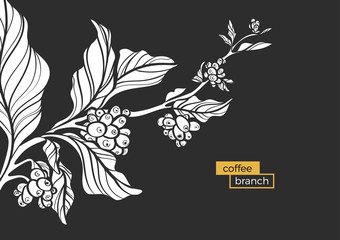 White branch of coffee tree with leaves and natural coffee beans. Vector