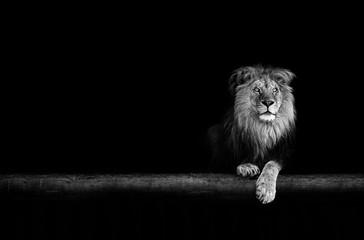 Foto auf Leinwand Löwe Lion Portrait in the dark