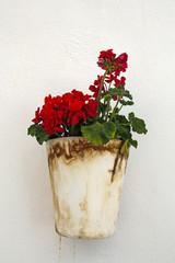 geranium flowers on white wall