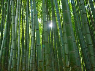 Bambus Hintergrund Wald Licht
