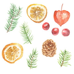 Watercolor hand drawn Christmas clip-art, fir branches with citrus and berries, isolated on white background. Winter holidays festive design.
