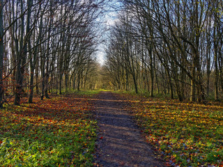 Autumn sunlight streaming from behind tall, thin, bare trees casts shadows over a long straight woodland path.