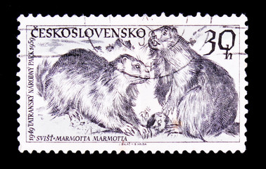 Photo sur Toile Croquis dessinés à la main des animaux MOSCOW, RUSSIA - JUNE 20, 2017: A stamp printed in Czechoslovakia shows Alpine Marmots (Marmota marmota), circa 1959
