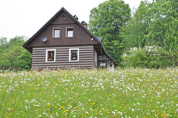 Flowering meadow at the cottage in the mountains.