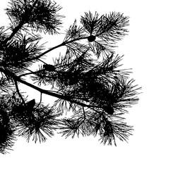 Realistic pine tree silhouette (Vector illustration).ai10