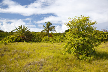Tropical Green Landscape, Antigua