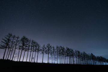 夜の防風林